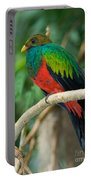 Male Golden-headed Quetzal Portable Battery Charger