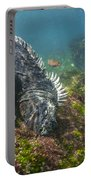 Marine Iguana Feeding On Algae Punta Portable Battery Charger