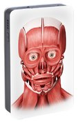 Medical Illustration Of Male Facial Portable Battery Charger