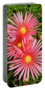 Mesa Verde Ice Plant Portable Battery Charger