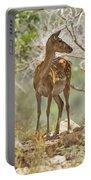 Mesopotamian Fallow Deer 5 Portable Battery Charger