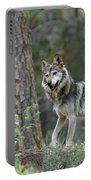 Mexican Grey Wolf 1 Portable Battery Charger