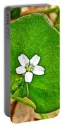 Miner's Lettuce In Park Sierra Near Coarsegold-california  Portable Battery Charger