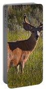 Mule Deer Buck In Velvet   #2164 Portable Battery Charger
