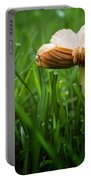 Mushroom Growing Wild On Lawn Portable Battery Charger