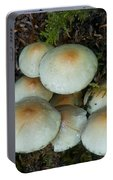 Mushrooms In The Oregon Coast Range Portable Battery Charger