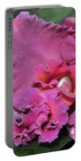 Orchid Sophrocattleya Royal Beau   H And R Portable Battery Charger