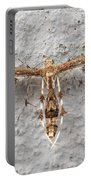 Plume Moth Portable Battery Charger