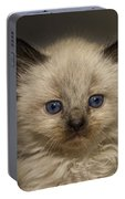 Precious Baby Kitty Portable Battery Charger