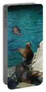 Seaworld Sea Lions Portable Battery Charger