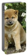 Shiba Inu Puppy Dog Portable Battery Charger