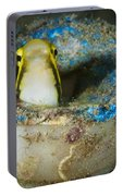 Short-head Sabretooth Blenny Peering Portable Battery Charger