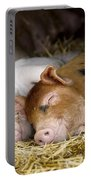 Sleeping Hogs  Portable Battery Charger