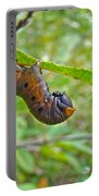 Snowberry Clearwing Hawk Moth Caterpillar - Hemaris Diffinis Portable Battery Charger