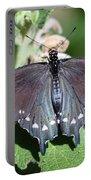 Spicebush Swallowtail Papilio Troilus Portable Battery Charger