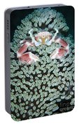 Spotted Porcelain Crab In Anemone Portable Battery Charger