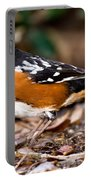 Spotted Towhee Pipilo Maculatus Portable Battery Charger