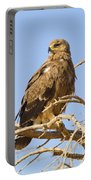 Steppe Eagle Aquila Nipalensis Portable Battery Charger