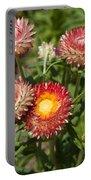 Straw Flowers Xerochrysum Bracteatum Portable Battery Charger