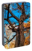 Texture Of The Bark. Old Oak Tree Portable Battery Charger