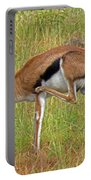 Thomson's Gazelle Portable Battery Charger