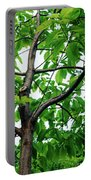 Trees In A Park, Adams Park, Wheaton Portable Battery Charger