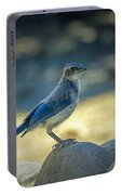 Western Scrub Jay Thief Portable Battery Charger