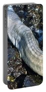 White Moray Eel Portable Battery Charger