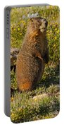 Yellow Bellied Marmot On Alert In  Rocky Mountain National Park Portable Battery Charger