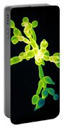 Candida, Sem Portable Battery Charger