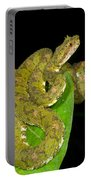 Eyelash Viper Portable Battery Charger