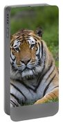 Siberian Tiger, China Portable Battery Charger