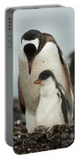 Gentoo Penguin With Young Portable Battery Charger