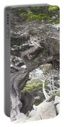 17 Mile Drive Tree Portable Battery Charger