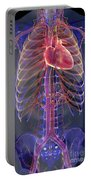 The Cardiovascular System Portable Battery Charger