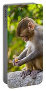 A Baby Macaque Eating An Orange Portable Battery Charger