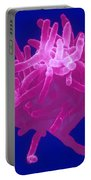 Actinomyces Portable Battery Charger