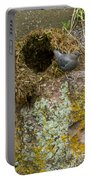 American Dipper And Nest   #1487 Portable Battery Charger