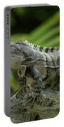 An Iguana Sunbathes In The Ancient Portable Battery Charger