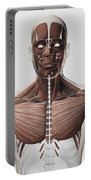 Anatomy Of Male Muscular System, Side Portable Battery Charger