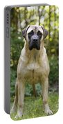 Bullmastiff Dog Portable Battery Charger