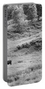Cows Grazing In Field Rockport Maine Portable Battery Charger