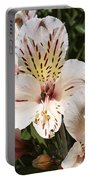 Desert Willow Portable Battery Charger