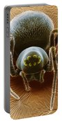 Dictynid Spider Portable Battery Charger by David M. Phillips