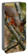 Eurasian Red Squirrel Portable Battery Charger