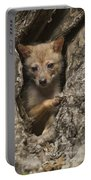Golden Jackal Canis Aureus Cubs Portable Battery Charger