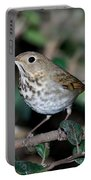 Hermit Thrush Portable Battery Charger