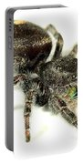 Jumping Spider Portable Battery Charger