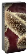 Microscopic View Of Paramecium Portable Battery Charger