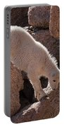 Mountain Goat Kid On Mount Evans Portable Battery Charger